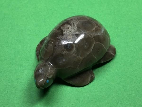 Rosella Lunasee (Zuni) - Schildkröte